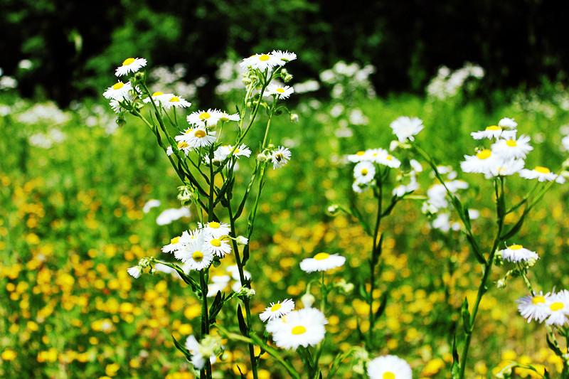春天去拍table草!