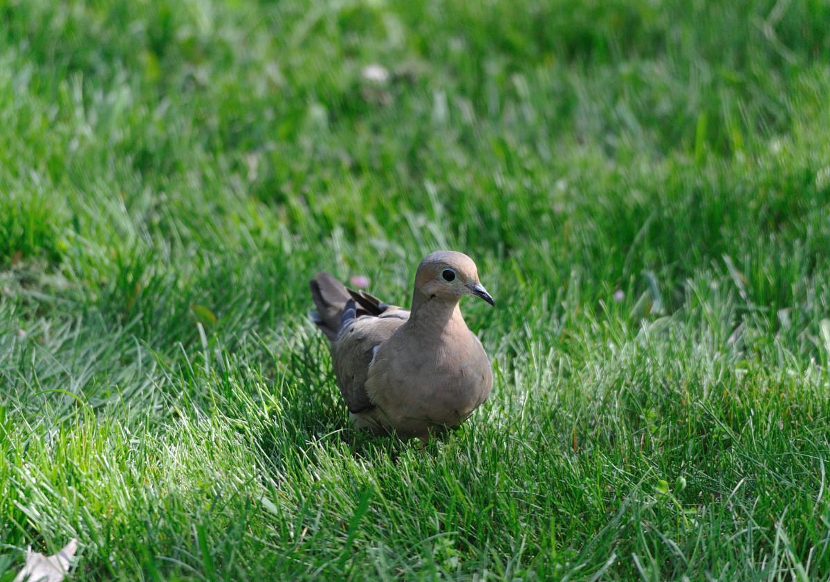 后院打了几只鸟_图1-11