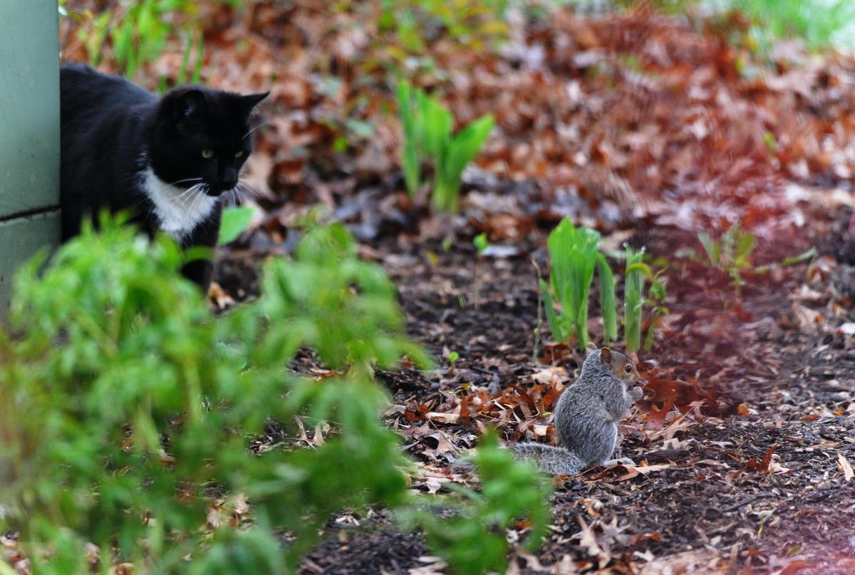 黑猫警长和鼠小弟_图1-1