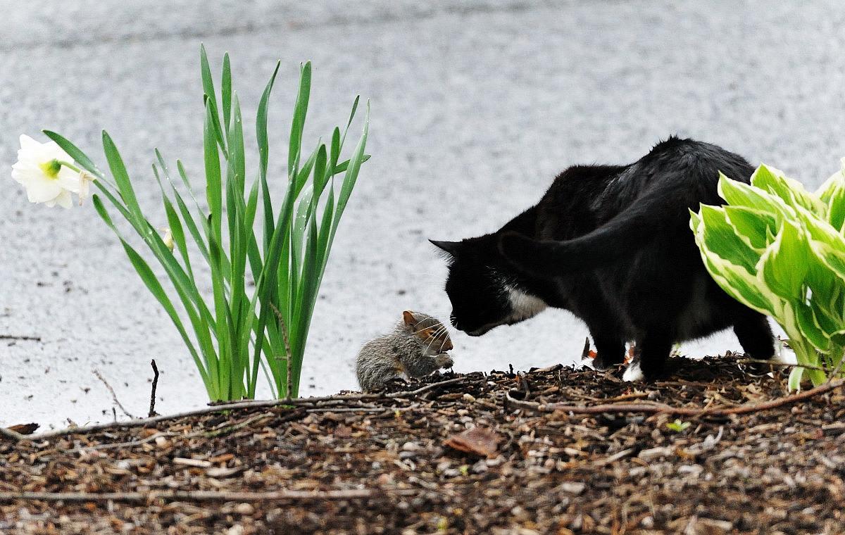 黑猫警长和鼠小弟_图1-3