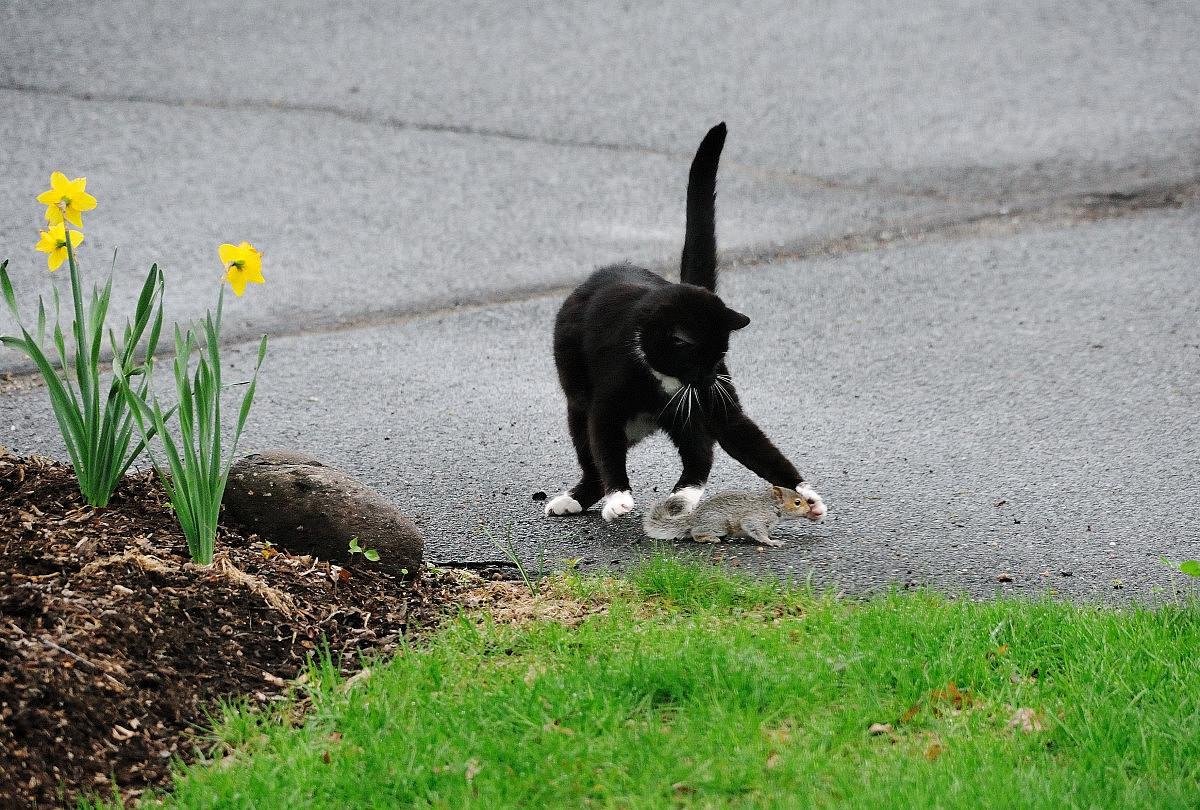 黑猫警长和鼠小弟_图1-4
