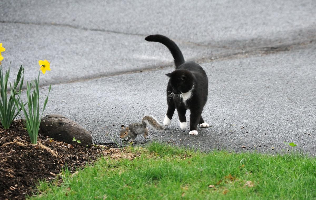 黑猫警长和鼠小弟_图1-5