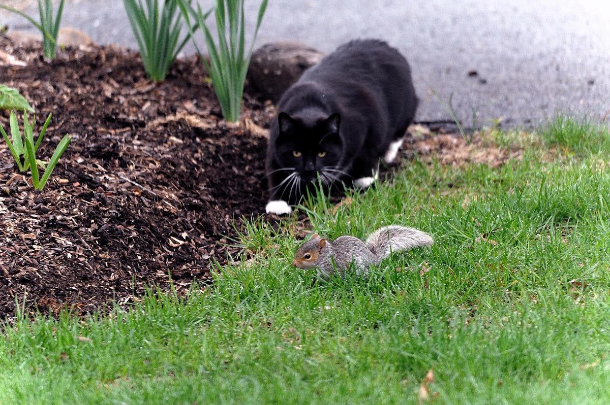 黑猫警长和鼠小弟_图1-2