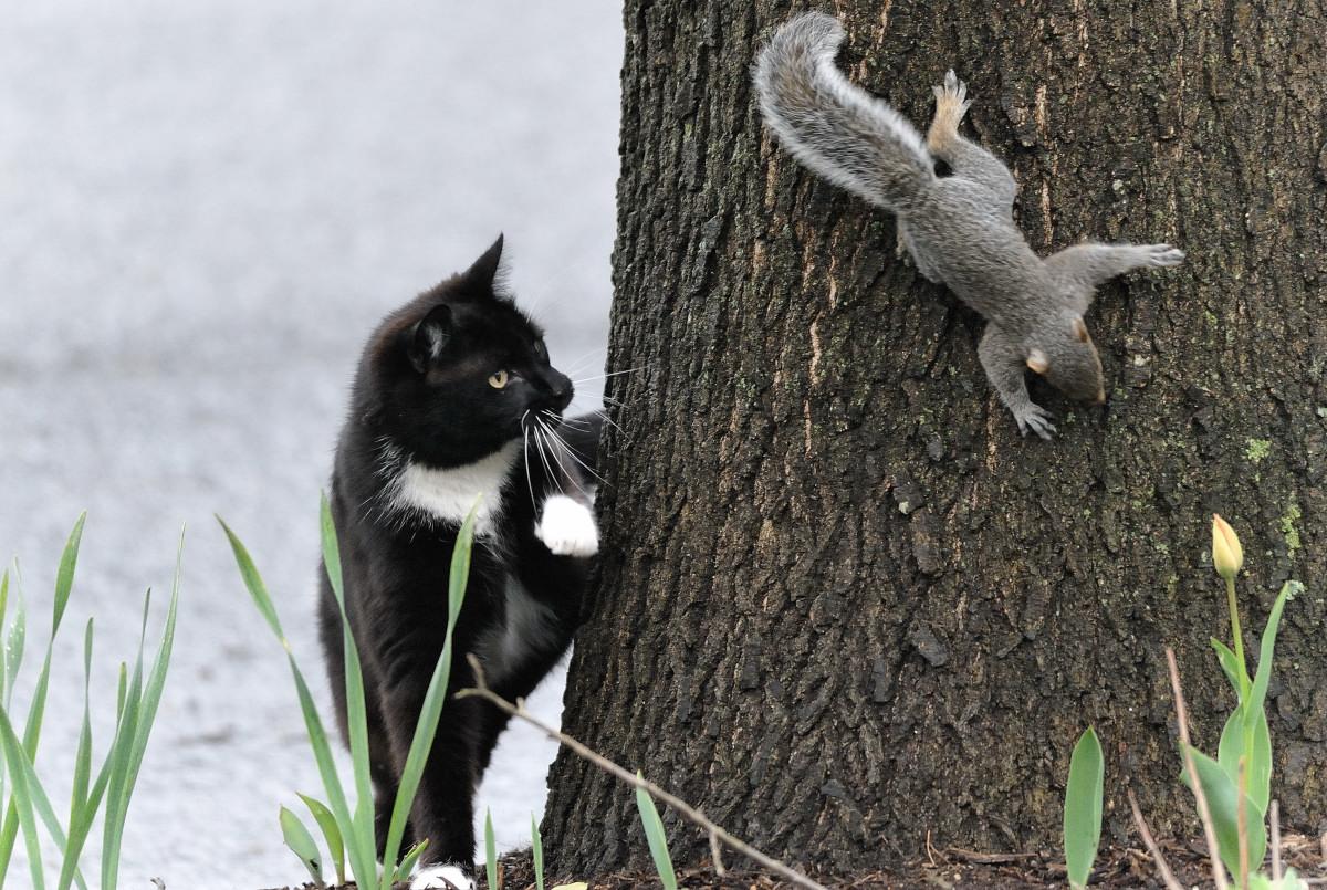 黑猫警长和鼠小弟_图1-6