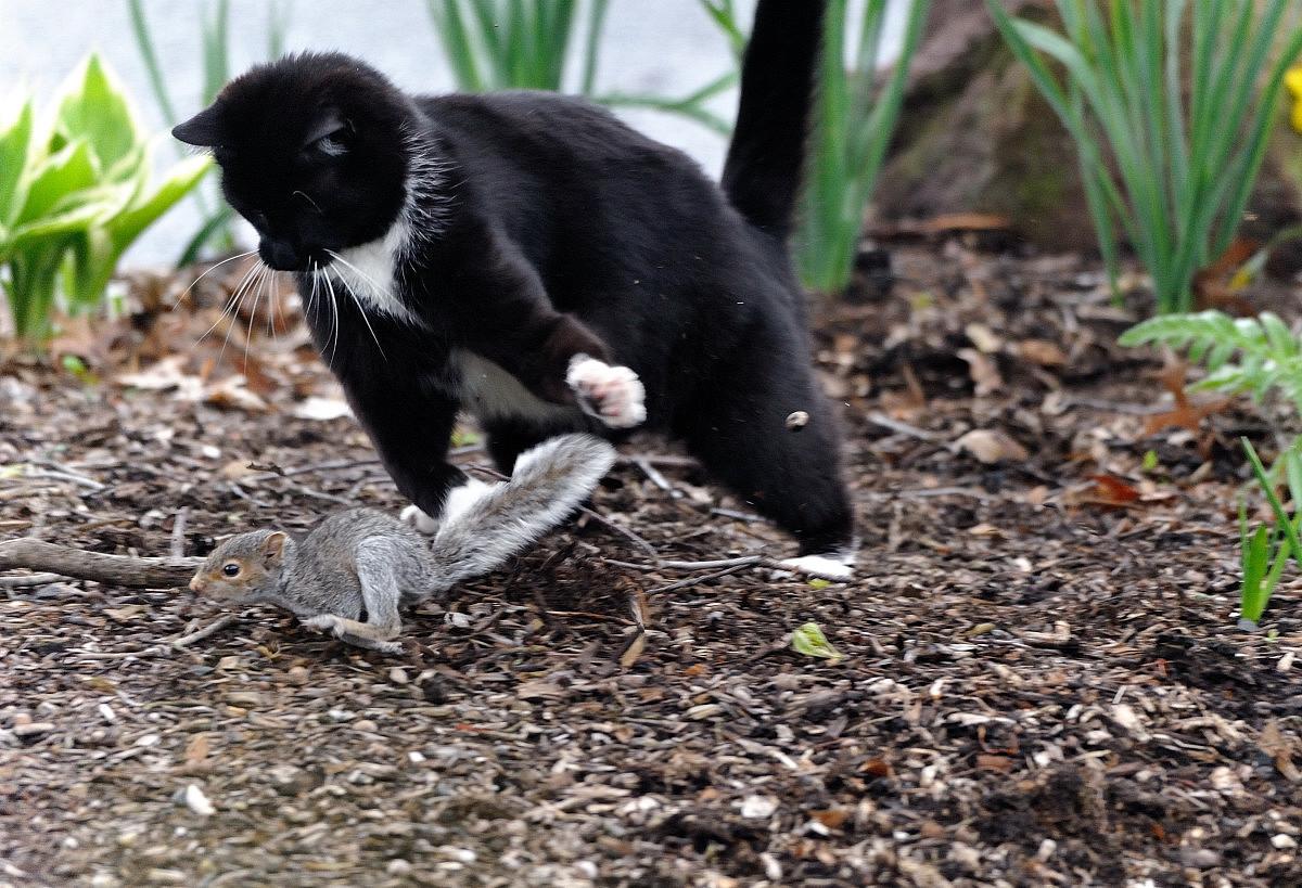 黑猫警长和鼠小弟_图1-7