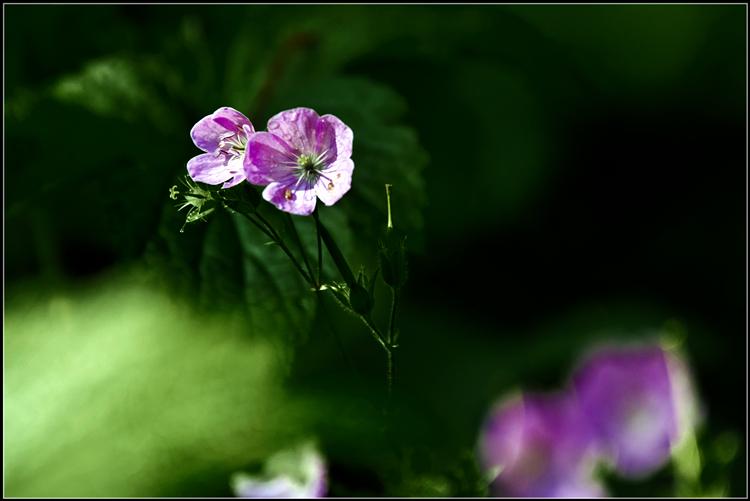 【star8拍摄】春天的小花