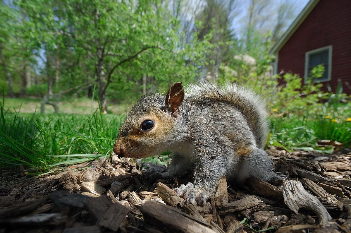 发萌的鼠小弟Stuart Little_图1-18