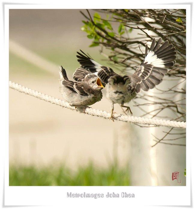 【风】小鸟初长成