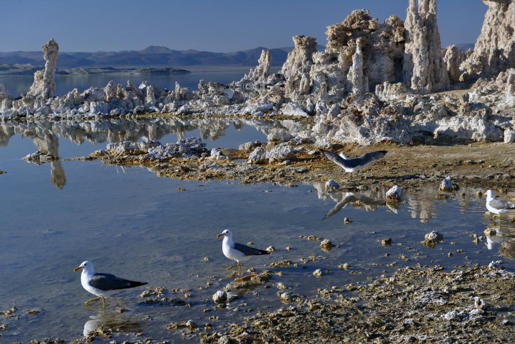 莫诺湖(Mono Lake)的尊容_图2-13
