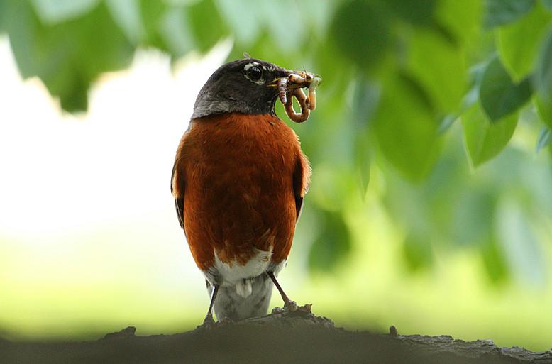 抓拍~大鸟给小鸟喂食精彩瞬间!_图1-1