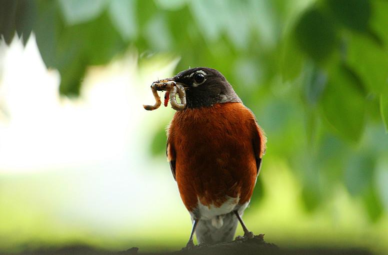 抓拍~大鸟给小鸟喂食精彩瞬间!_图1-2