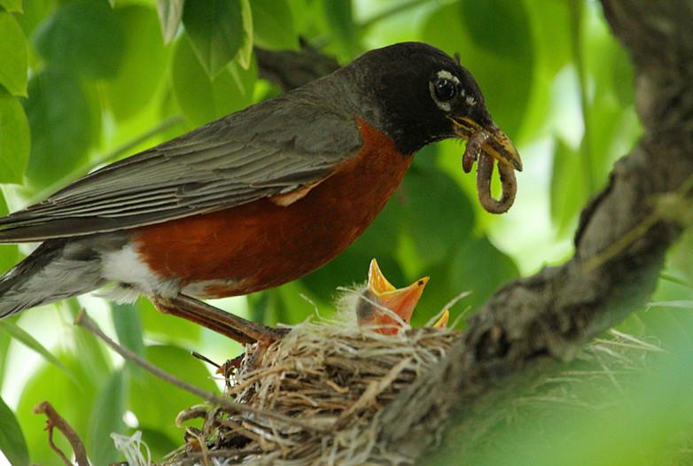 抓拍~大鸟给小鸟喂食精彩瞬间!_图1-3