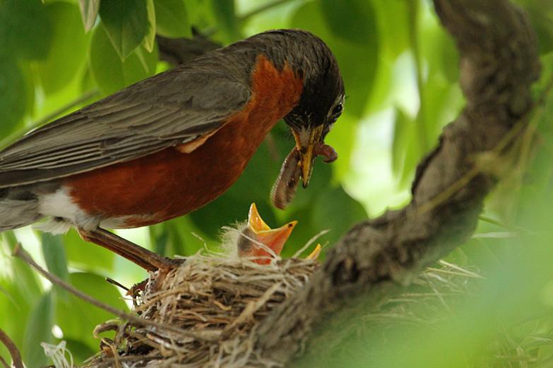 抓拍~大鸟给小鸟喂食精彩瞬间!_图1-4