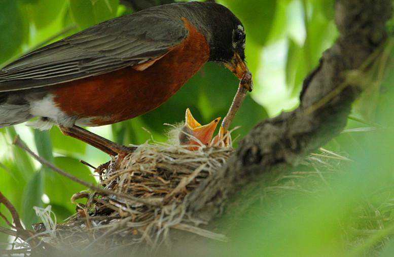 抓拍~大鸟给小鸟喂食精彩瞬间!_图1-5