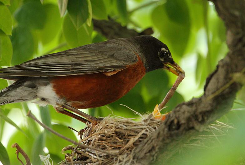 抓拍~大鸟给小鸟喂食精彩瞬间!_图1-6