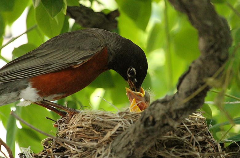 抓拍~大鸟给小鸟喂食精彩瞬间!_图1-8