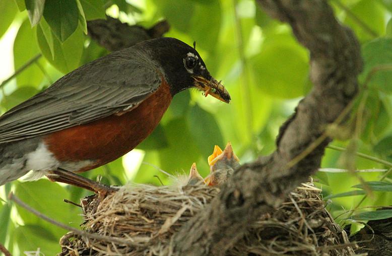 抓拍~大鸟给小鸟喂食精彩瞬间!_图1-20