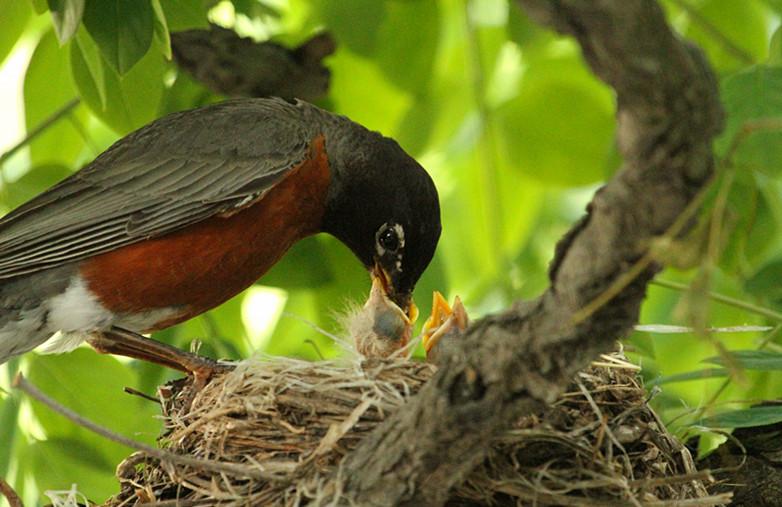 抓拍~大鸟给小鸟喂食精彩瞬间!_图1-23