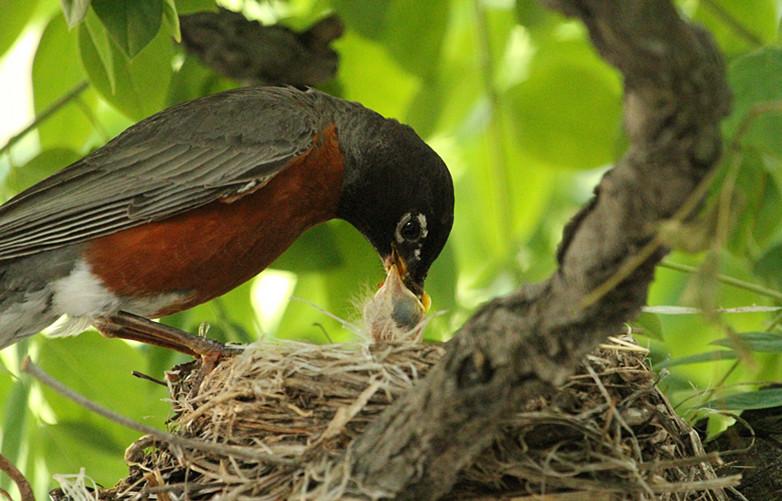 抓拍~大鸟给小鸟喂食精彩瞬间!_图1-24