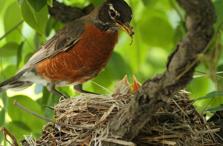 抓拍~大鸟给小鸟喂食精彩瞬间!_图1-26