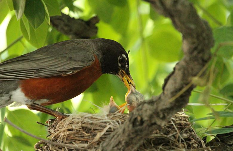 抓拍~大鸟给小鸟喂食精彩瞬间!_图1-29