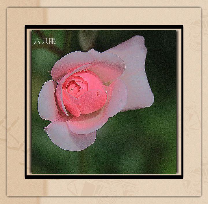 六只眼:羞答答的玫瑰 静悄悄的开_图1-1