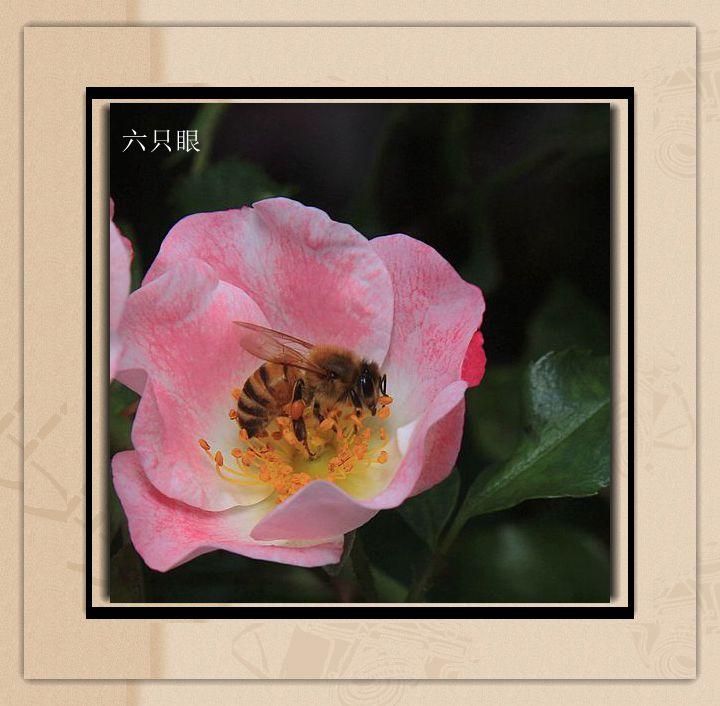 六只眼:羞答答的玫瑰 静悄悄的开_图1-2