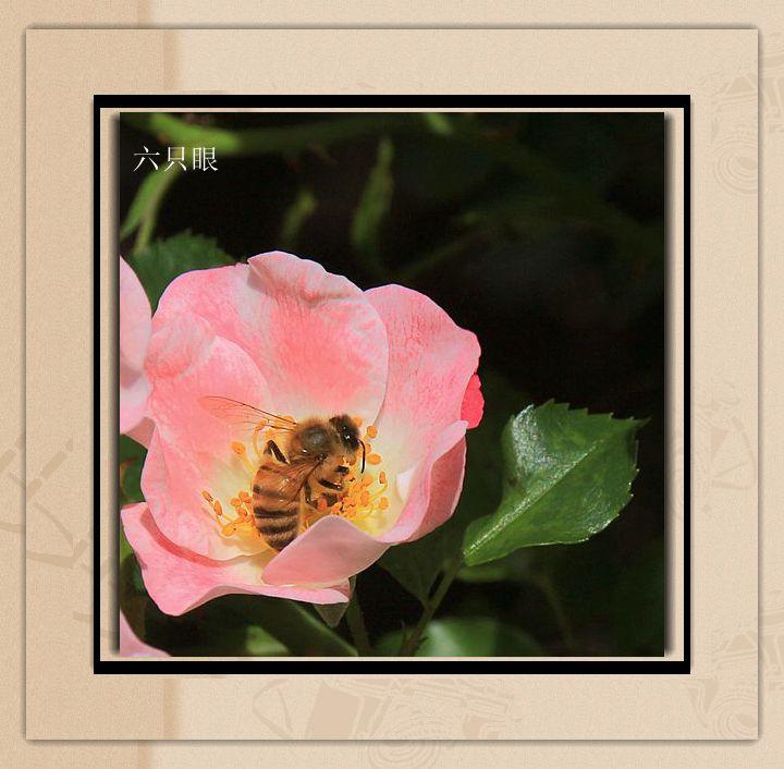 六只眼:羞答答的玫瑰 静悄悄的开_图1-3