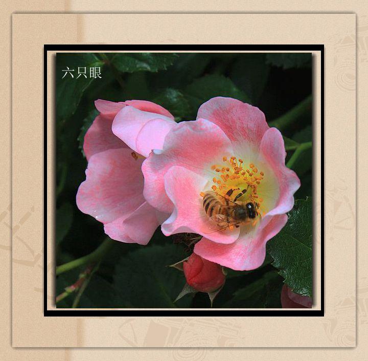 六只眼:羞答答的玫瑰 静悄悄的开_图1-4