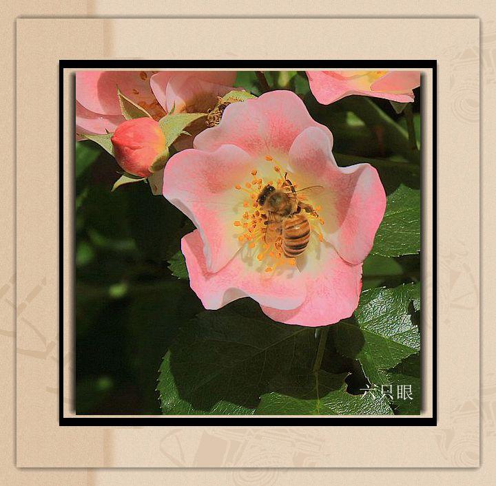 六只眼:羞答答的玫瑰 静悄悄的开_图1-5