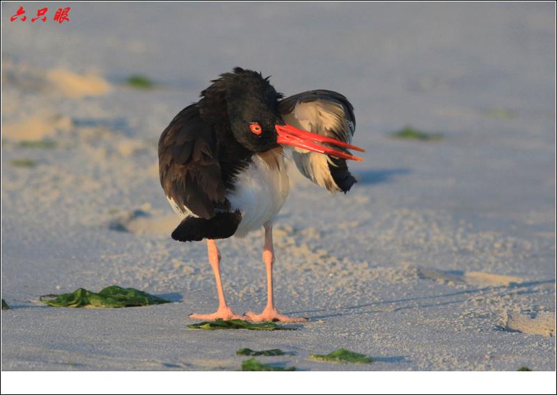 六只眼:红嘴鸥和它的宝宝_图1-14