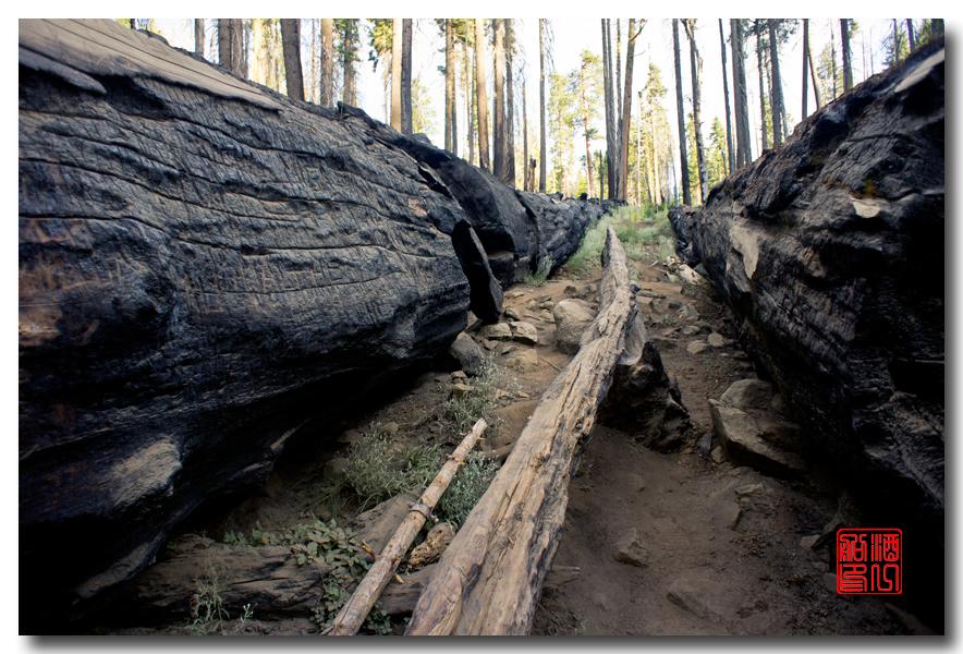 《酒一船》:优胜美地之火 — 燃烧的红杉林_图1-17