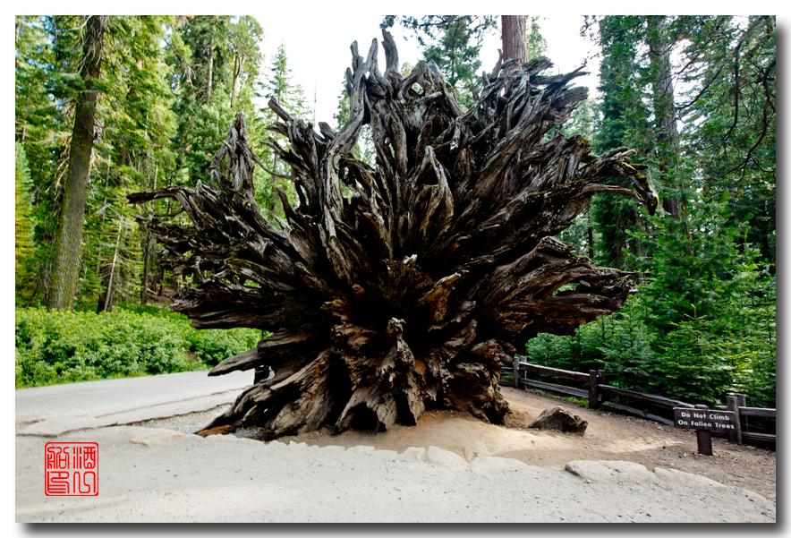 《酒一船》:优胜美地之火 — 燃烧的红杉林_图1-20