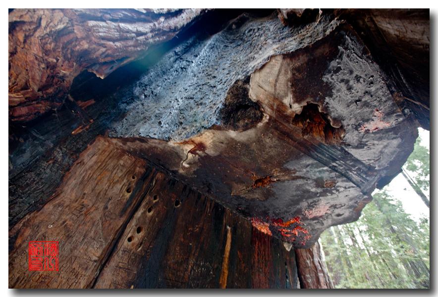 《酒一船》:优胜美地之火 — 燃烧的红杉林_图1-26