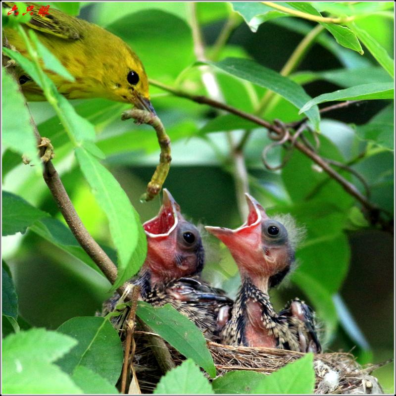 六只眼:鸟流氓_图1-5