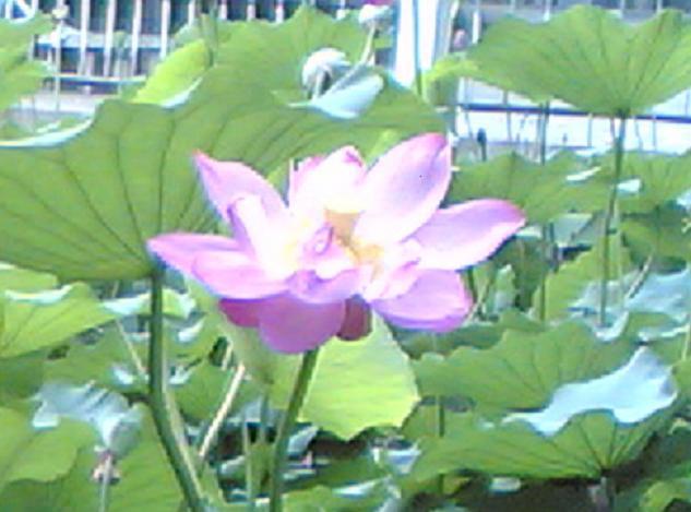 金色的莲蓬_图1-1