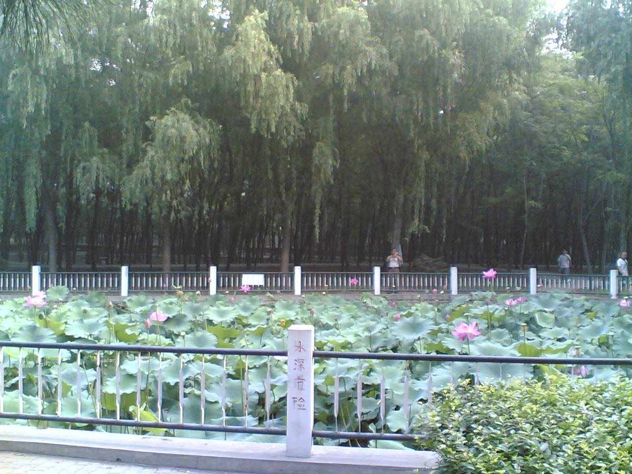 金色的莲蓬_图1-6