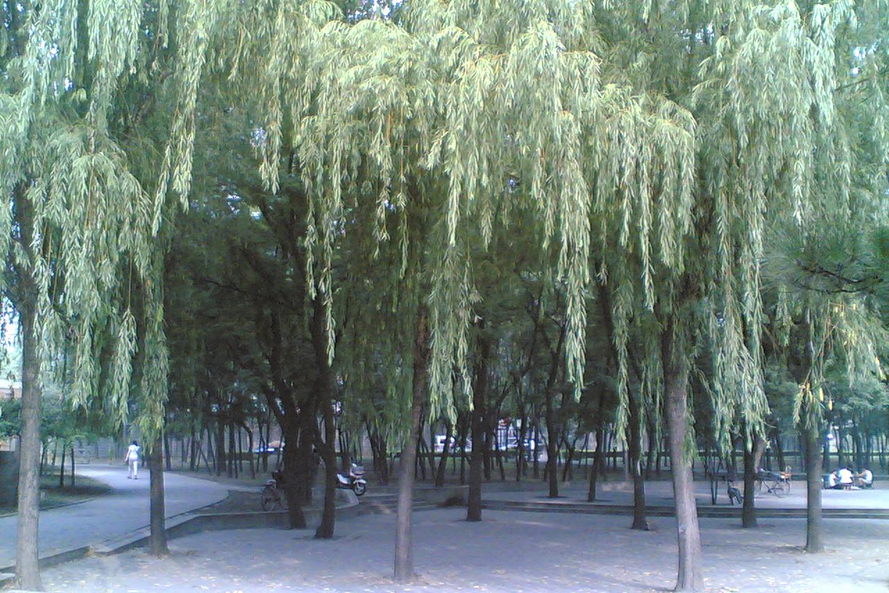 金色的莲蓬_图1-9