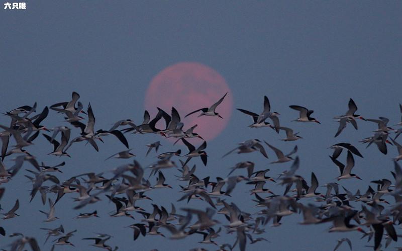 六只眼:试拍超级大月亮_图1-3