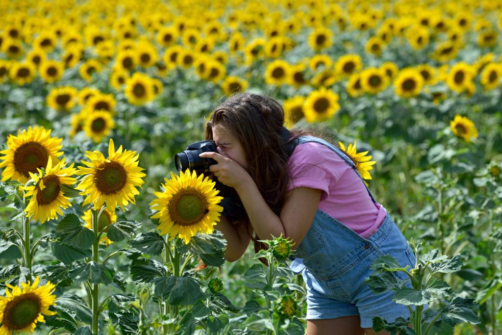 葵花朵朵向阳开_图1-16