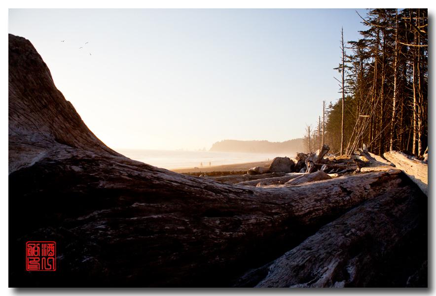 《酒一船摄影》:奥林匹克国家公园的海岸及日落_图1-2