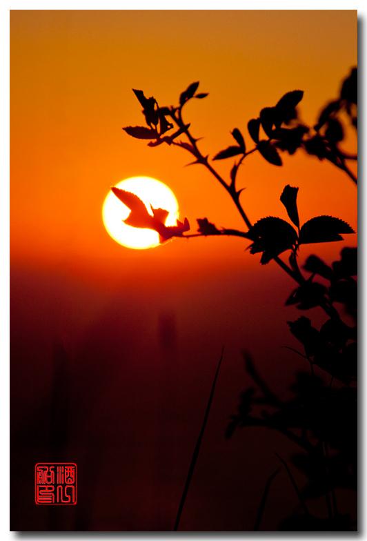 《酒一船摄影》:奥林匹克国家公园的海岸及日落_图1-28