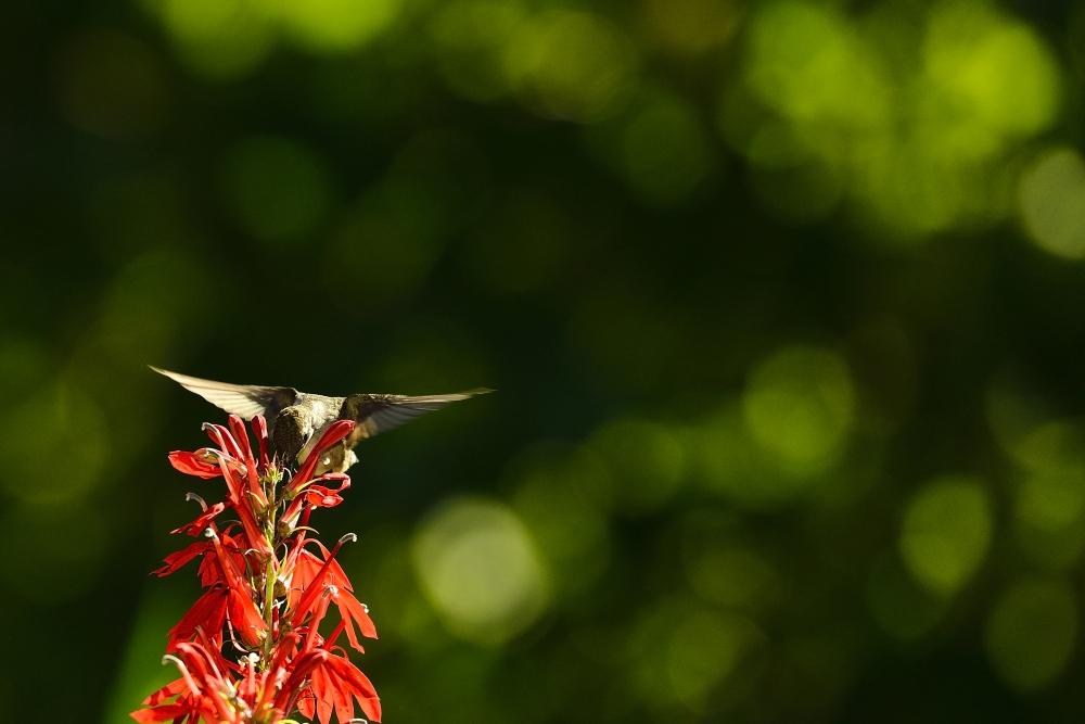 令我兴奋的邂逅【蜂鸟】_图1-2