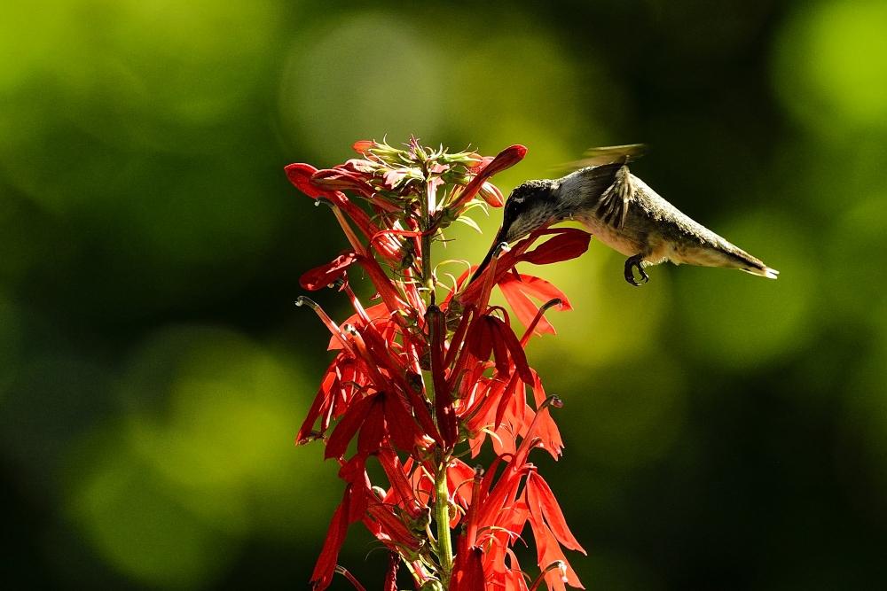 令我兴奋的邂逅【蜂鸟】_图1-5