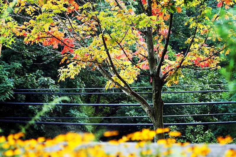 今天去天鹅湖拍鸟看到叶子开始