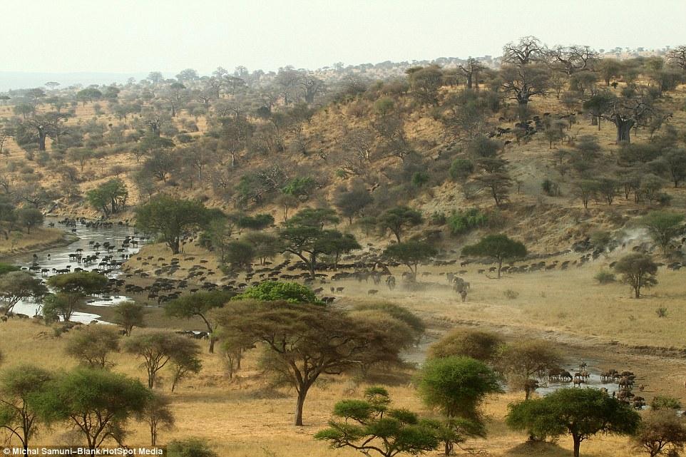 温顺象群为争水源驱赶500头水牛场面壮观_图1-9
