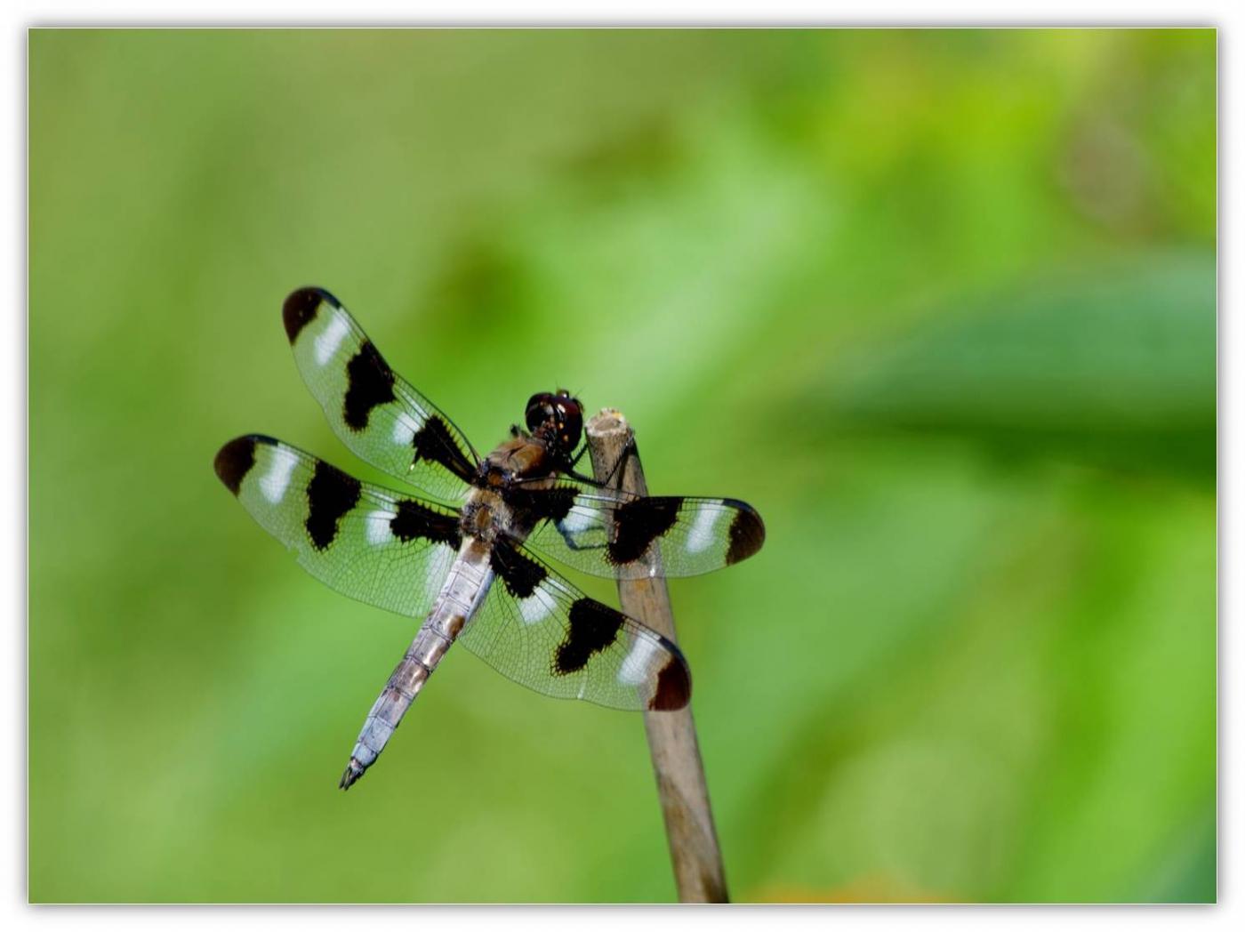 夏日蜻蜓多
