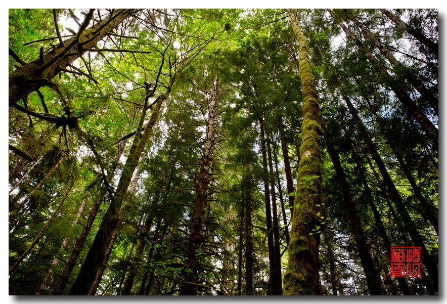 《酒一船》摄影:奥林匹克国家公园的温带雨林_图1-2