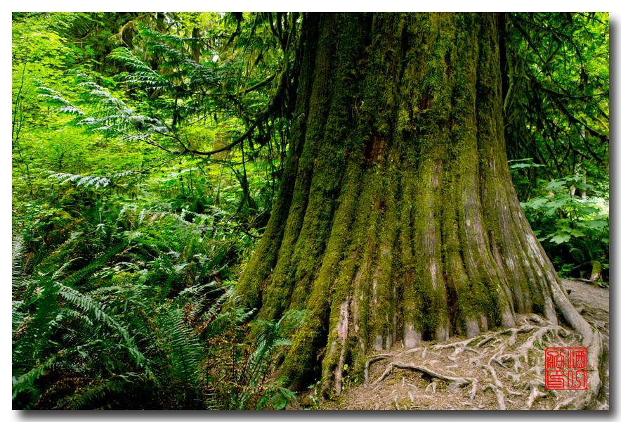 《酒一船》摄影:奥林匹克国家公园的温带雨林_图1-3