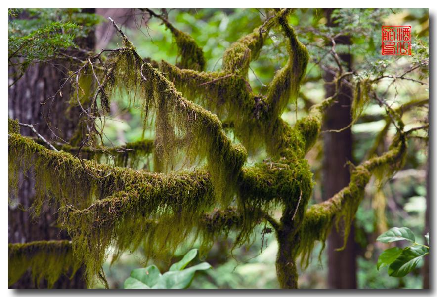 《酒一船》摄影:奥林匹克国家公园的温带雨林_图1-5